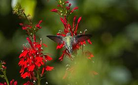 Hummingbird Symmetry.jpeg