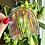 Thumbnail: Rainbow Suncatcher