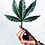 Thumbnail: Cannabis & CBD: For Health and Wellness