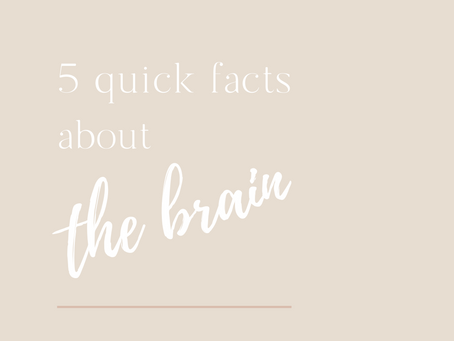 5 Quick Facts About The Brain
