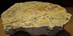 skamieniałe drzewo