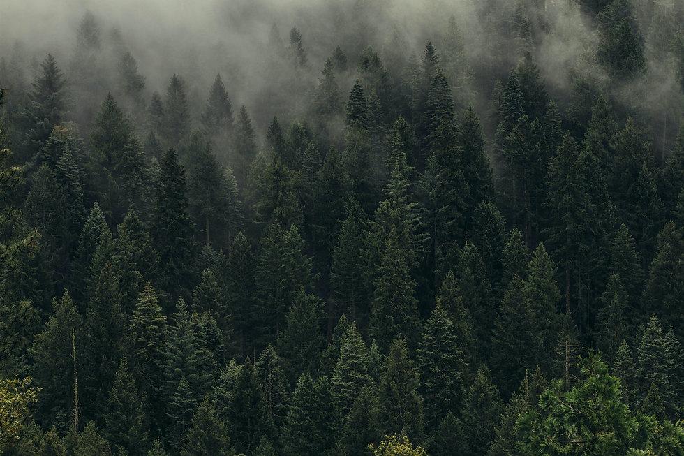 Natural Organic Background