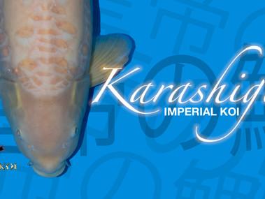 Imperial Koi - Karashigoi