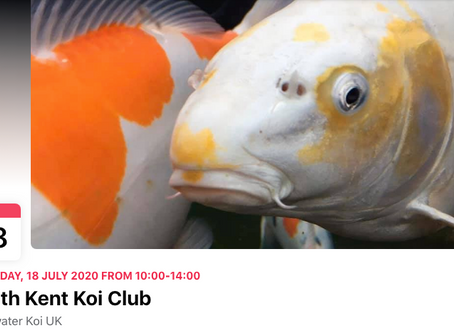 Clearwater Koi - South Kent Club Day