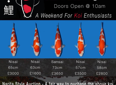 The Event - Rasta Koi & The Koi Collection