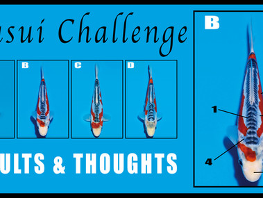 Shusui Challenge - Results & Thoughts.