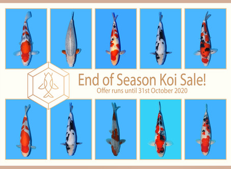 Chosen Koi - Special Offers
