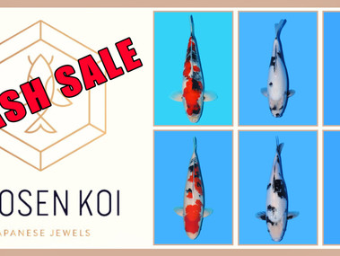 Chosen Koi Flash Sale
