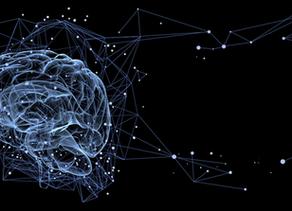 A la rencontre de notre cerveau