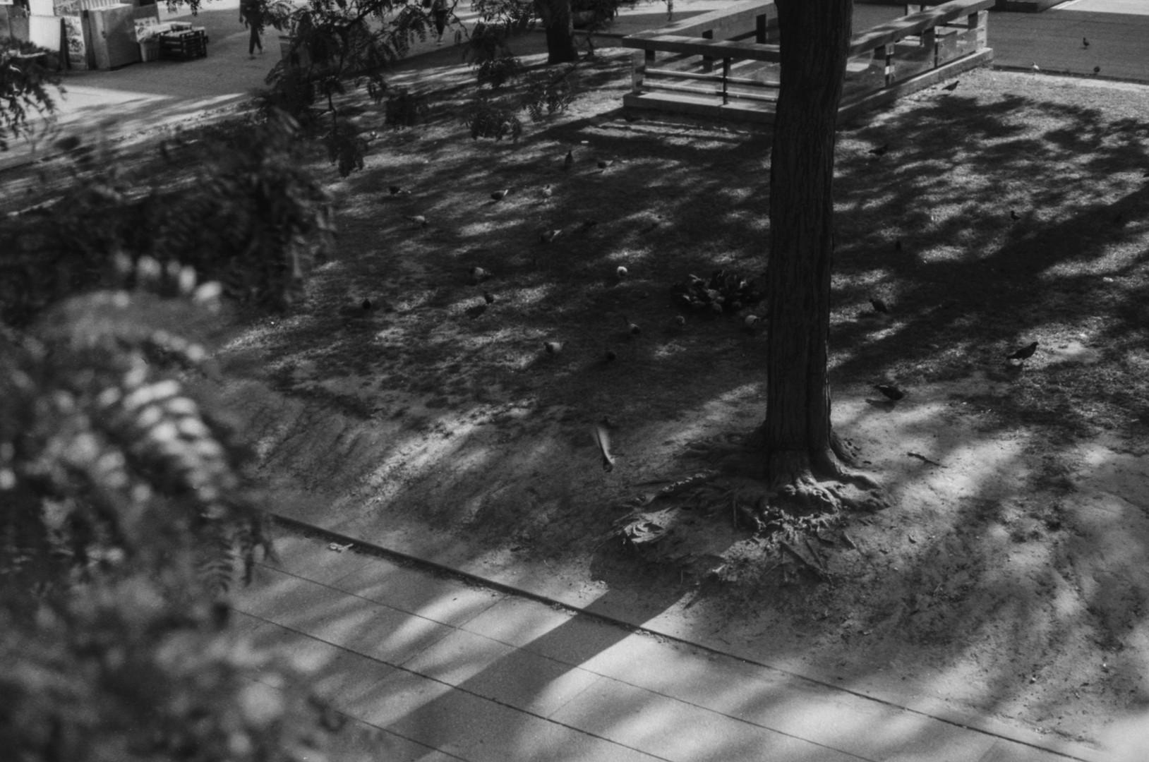 20190828 Kodak Tmax100 17.jpg