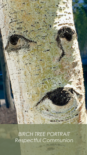 BIRCH TREE PORTRAIT Respectful Communication