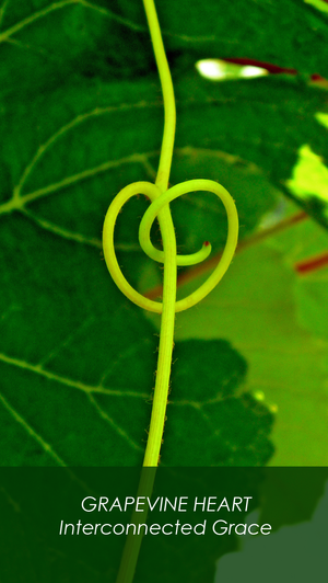 GRAPEVINE HEART  Interconnected Grace