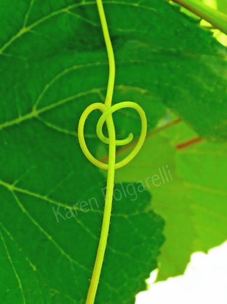 Green Grapevine Heart