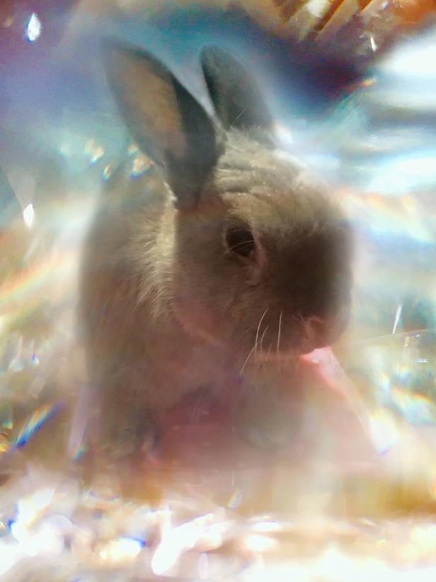 Fooey crystal.jpg