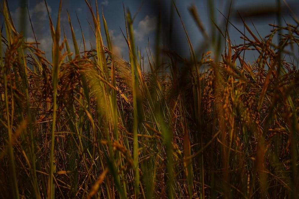 Grasslands Kokkode