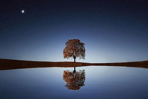 tree-838667__340.jpg