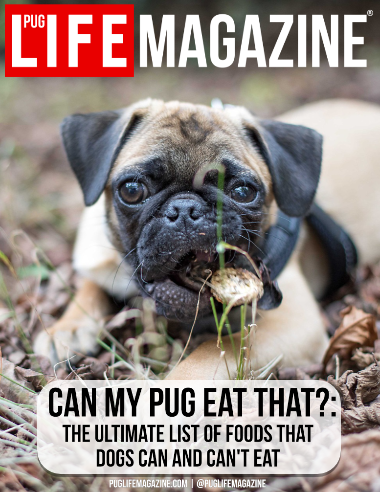 We have put together the ultimate list of foods your dogs can and can't eat. Find out if food is safe or toxic for your dog.