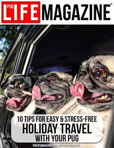 10 Tips for Easy & Stress-Free Holiday Travel with Your Pug