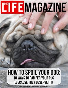 How to Spoil Your Dog: 10 Ways to Pamper Your Pug