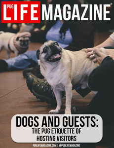 Dogs and Guests: The Pug Etiquette of Hosting Visitors
