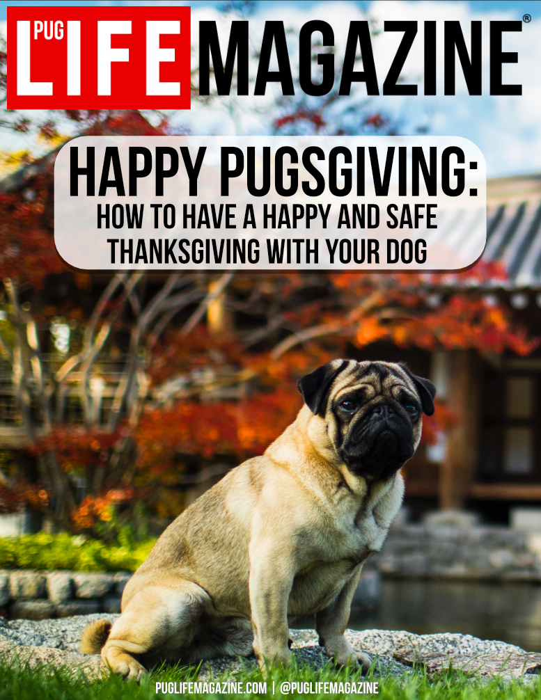 How to Have a Happy and Safe Thanksgiving with Your Dog