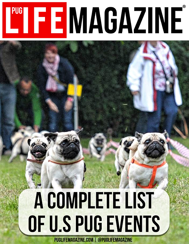 A Complete List of U S  Pug Events and Pug Festivals