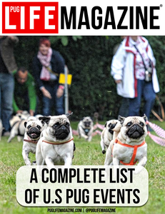 A Complete List of U.S. Pug Dog Fests and Events