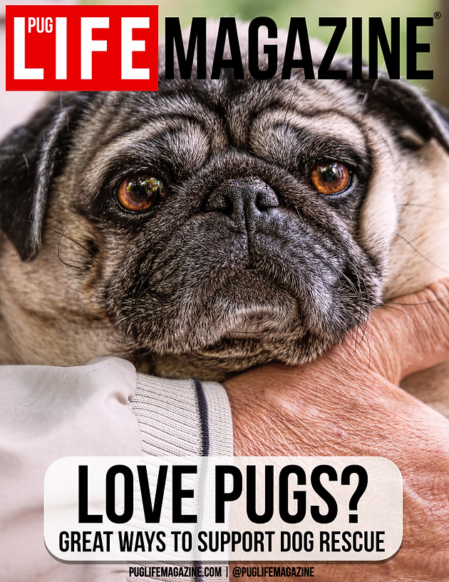 Love Pugs? Great Ways to Support Dog Rescue