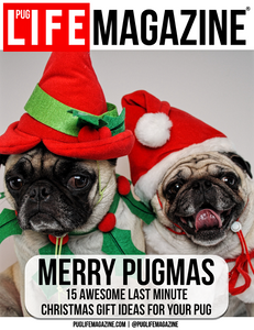 15 Awesome Last Minute Christmas Gift Ideas for Your Pug