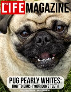 How to Brush Your Pug Dog's Teeth