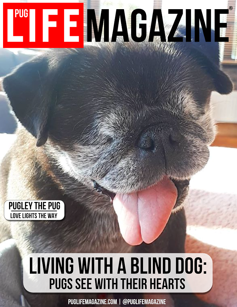 Living with a Blind Dog: Pugs See with their Hearts
