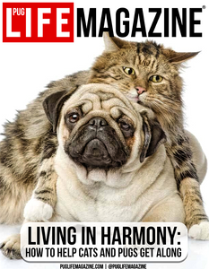 Living in Harmony: How to Help Cats and Dogs Get Along