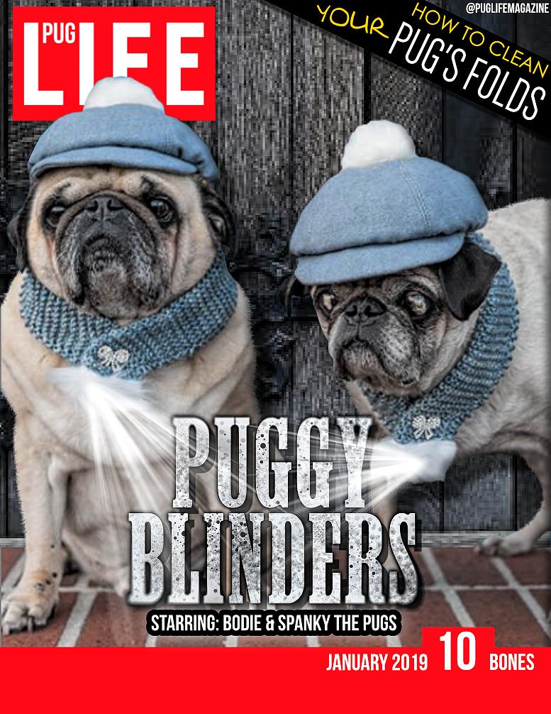 Bodie and Spanky the Pugs | Pug Life Magazine