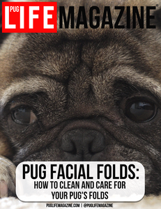 How to Clean and Care for Your Pug Facial Folds