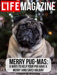 Christmas and holidays with your dog