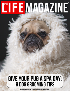 Spa Day: 8 Dog Grooming Tips