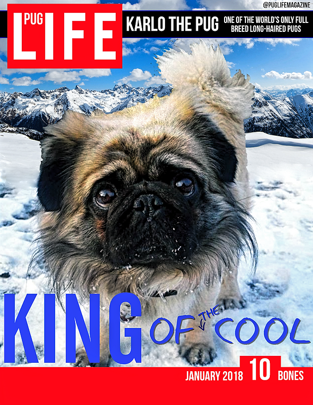 Volume 87 Karlo The Pug Pug Life Magazine A Community Of