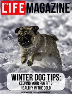 Winter Dog Tips: Keeping Your Pug Fit & Healthy in the Cold