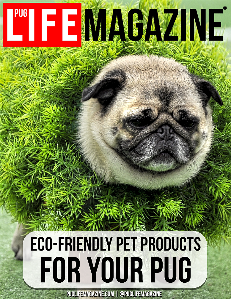Eco-Friendly Pet Products for Your Pug Dog