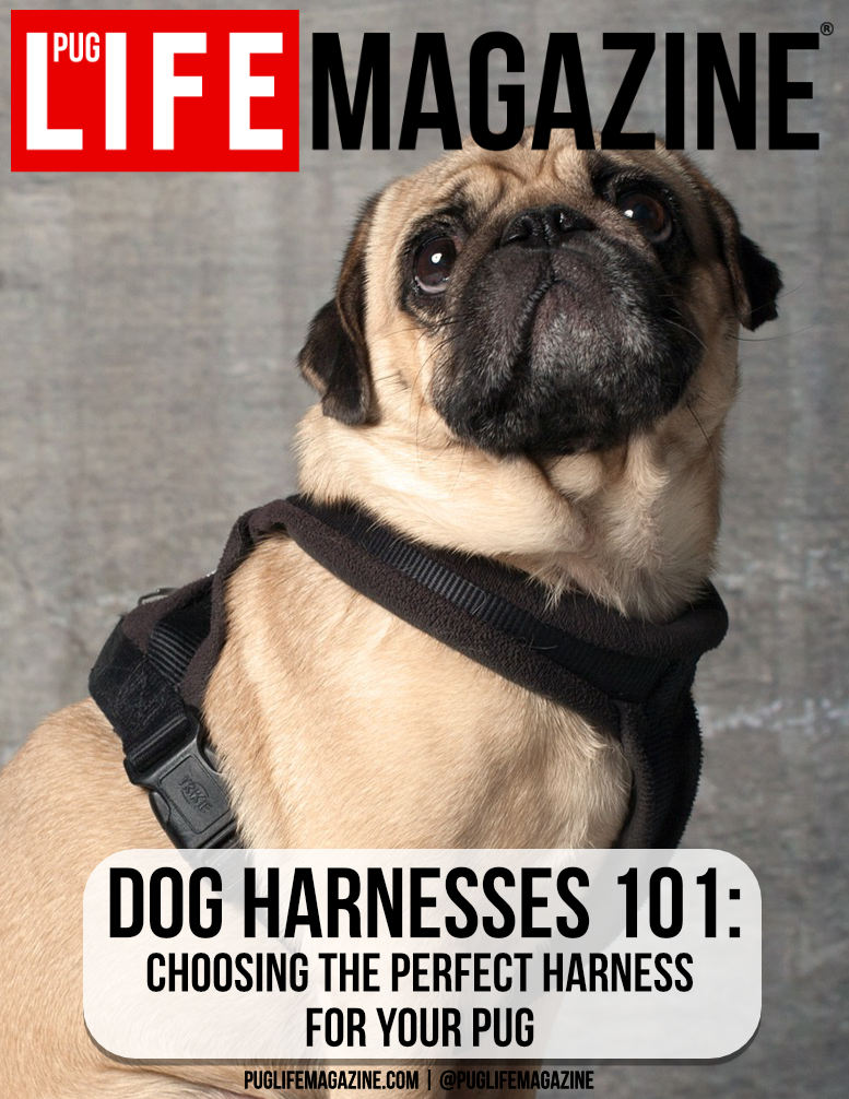 Choosing the perfect pug dog harness