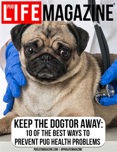 Keep the Vet Away: Preventing Pug Dog Health Problems