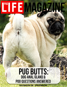 Pug Butts: Dog Anal Gland & Poo Questions Answered