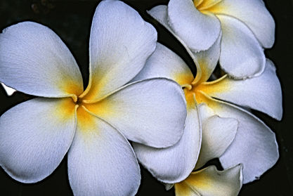 luxur retreat, New Zealand, Australia, Cook Islands retreat, Rarotonga retreat, yoga, wellbeing, wellness, mindfulness