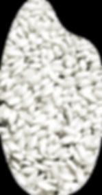 chicco-riso-ferraris