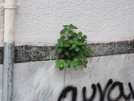 The Plant in the City | Catriona Gallagher at  A - DASH