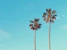 治療夏威夷世界我覺得涼爽,一邊聽音樂,在日本炎熱的夏天...