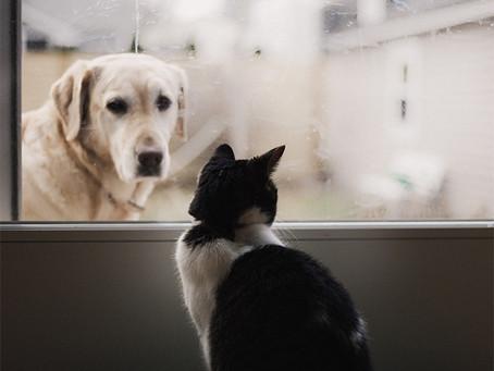 ペットと共に至福のリラックス・タイムを楽しむ