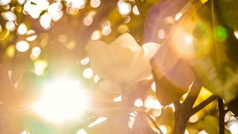 一日の終わりに心地よい音楽を聴きながら穏やかに、優しく、そして静かに素敵な時間をお過ごしください