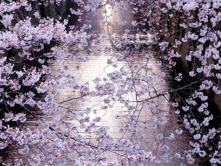 3月27日は日本人にとって大切な桜の日