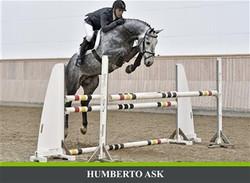 Far Humberto Ask